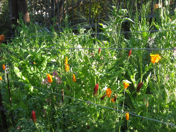 Wildflowers and vineyard 'cover crops' to feed the soil and our souls.