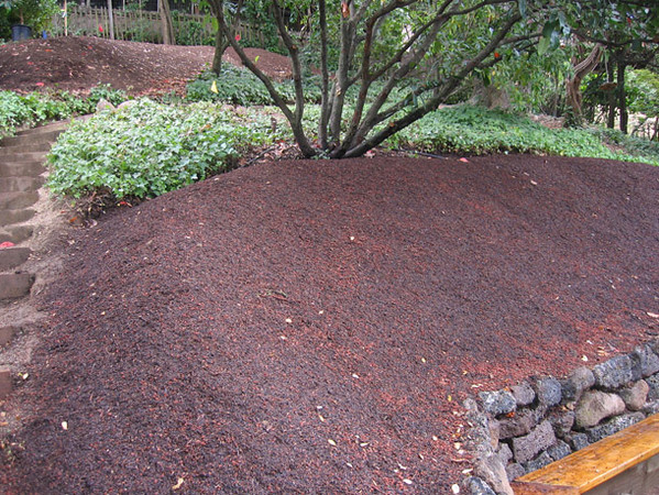 It all starts with excellent soil preparation.  Here we build planting berms to give plenty of room for future roots to spread out.