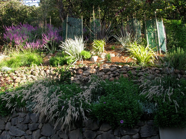 Different grasses and foliage providing textures and colors that evolve seasonally amidst the native stone walls.