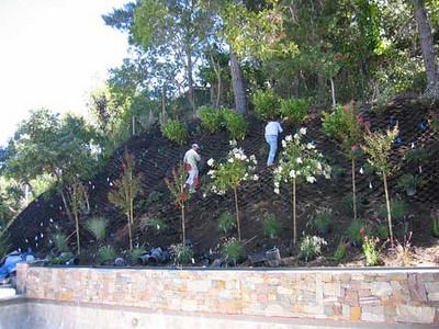 Putting in plants across the hillside.