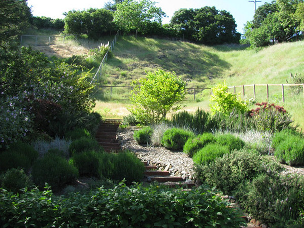 A year later...a beautiful, new mediterranean hillside garden.
