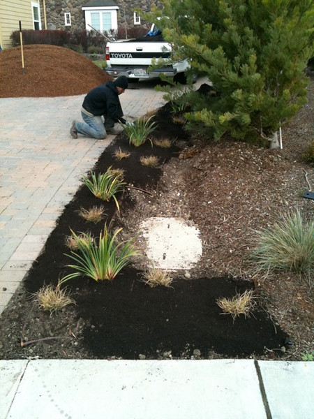After all the key soil and irrigation work, it's time to plant and mulch.