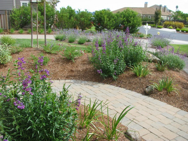 Penstemon hybrids to complement the lavenders.