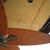 Ceiling Fans Closeup
