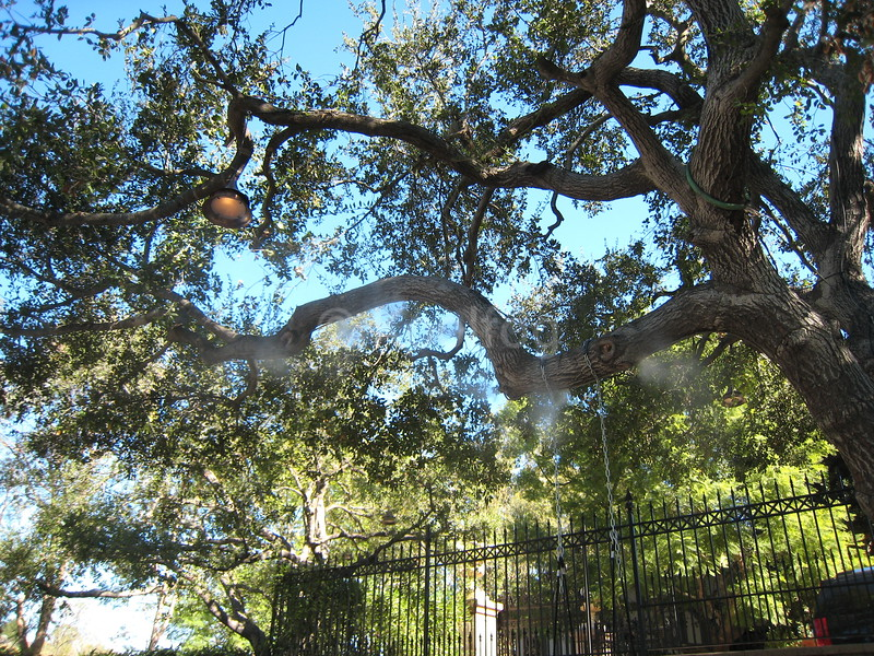 Misting Line in Tree Above Swing