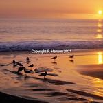 Laguna sunset-1