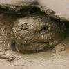 Mud Facial
