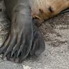 Flippper Toes