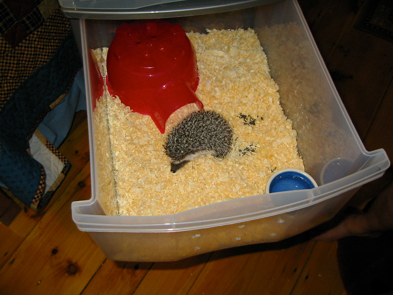 Temporary Housing During Cage Cleaning (07/18/2003)  The babies are moved to temporary housing while their main cages get cleaned.  Filename reference: 20030718-020650-HAH-Hedgehog_Temporary_Housing-SM