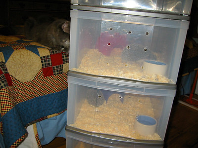 Temporary Housing During Cage Cleaning (07/18/2003)