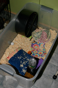 Miscellaneous Residents (02/28/2004)  Hedgehog Rescue  Filename reference: 20040228-211643-HAH-Miscellaneous_Residents-SM