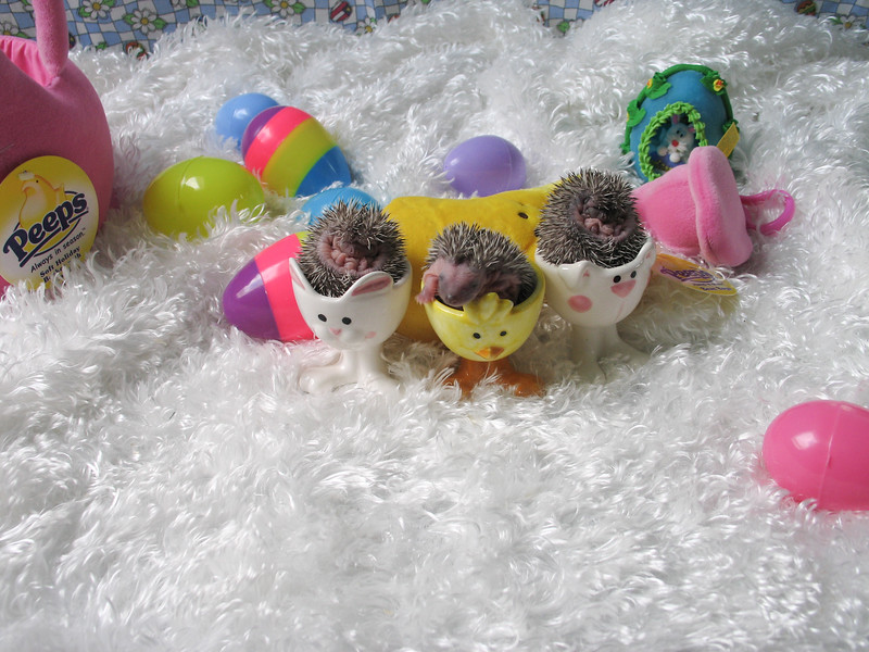 Easter Hedgies 2006  Easter Hedgies 2006  Filename reference: 20060406-162514-HAH-Easter_Hedgies_2006-SM