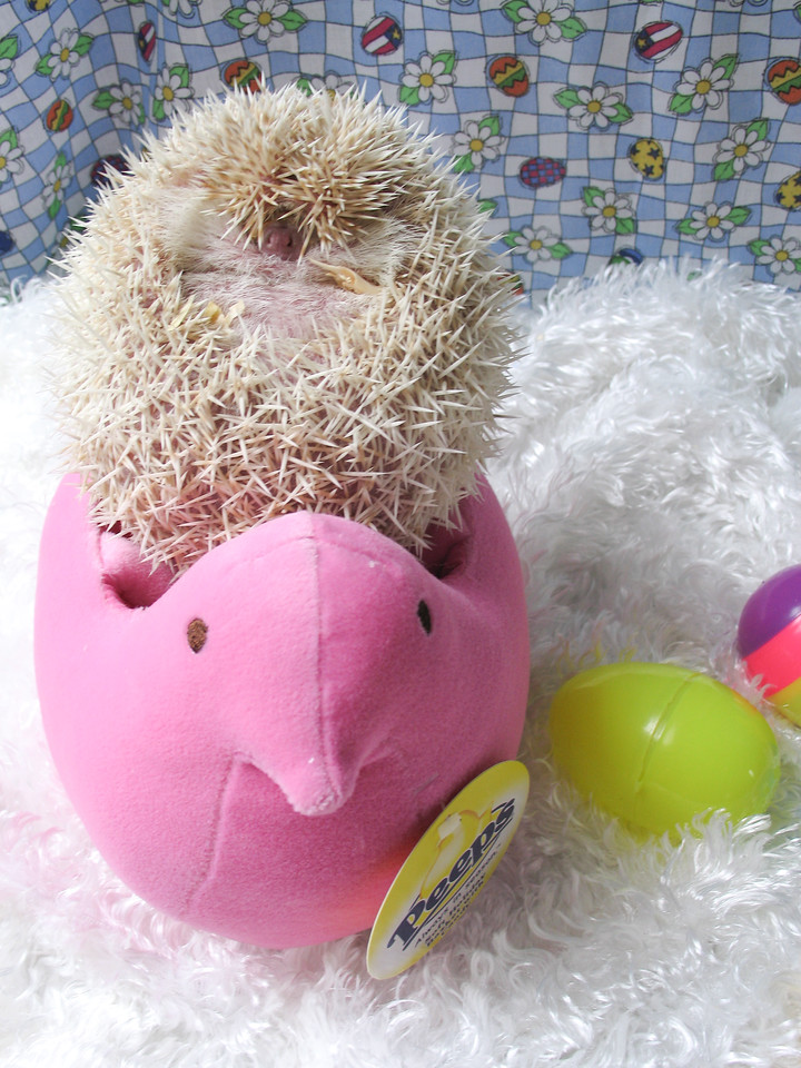 Easter Hedgies 2006  Easter Hedgies 2006  Filename reference: 20060406-163355-HAH-Easter_Hedgies_2006-SM