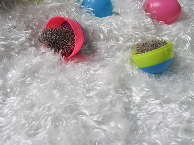 Easter Hedgies 2006  Easter Hedgies 2006  Filename reference: 20060406-163019-HAH-Easter_Hedgies_2006-SM