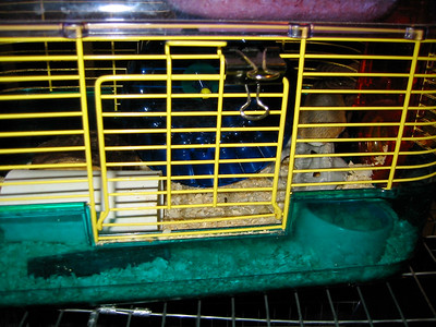 Hedgie Room Renovations 2003    Filename reference: 20030730-223653-HAH-Hedgie_Room_Renovations-SM