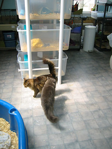 Kitties Explore the Facility  Kitties Explore the Facility  Filename reference: 20040422-115311-HAH-Kitties_Explore_the_Facility-SM