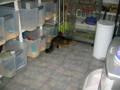 Kitties Explore the Facility  Kitties Explore the Facility  Filename reference: 20040505-004404-HAH-Hedgehog_Facility-SM