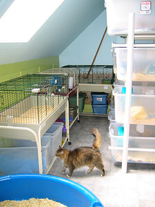 Kitties Explore the Facility  Kitties Explore the Facility  Filename reference: 20040422-115302-HAH-Kitties_Explore_the_Facility-SM