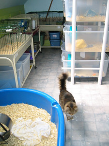 Kitties Explore the Facility  Kitties Explore the Facility  Filename reference: 20040422-115319-HAH-Kitties_Explore_the_Facility-SM