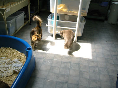 Kitties Explore the Facility  Kitties Explore the Facility  Filename reference: 20040422-115403-HAH-Kitties_Explore_the_Facility-SM