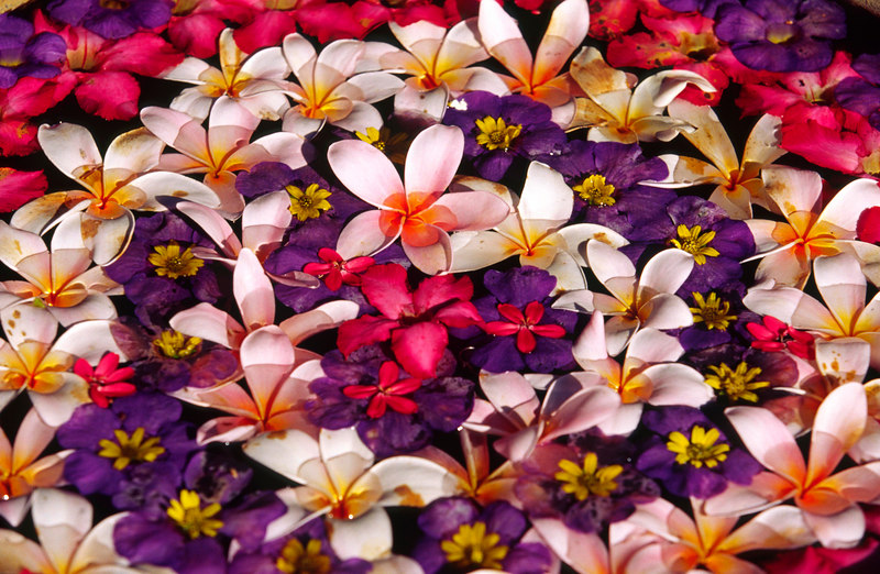 Attention to every detail, such as these beautifully arranged floating flowers, is evident everywhere at the exclusive private island Pangkor Laut Resort, Pankgor Laut, Selat Malaka (Straits of Malacca), Malaysia, Asia.