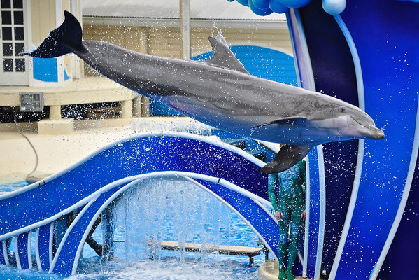 SeaWorld Orlando // January of 2010 //