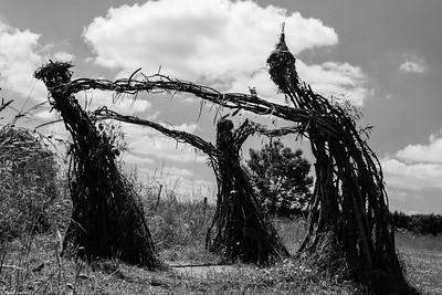 Wierd Willow