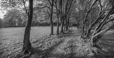 Hangers near Hawkley