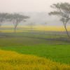 Misty Morning, Bikrampur, Bangladesh