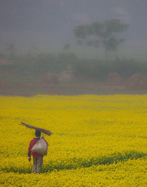 Rural Scene, Bikrampur, Bangladesh