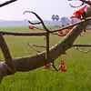 Paddy Field, Bhairab, Bangladesh