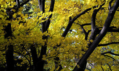 Fall foliage at Sapporo