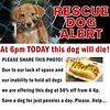 rescue-dog-july-14-2017-1000x1000