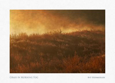Grass in Morning Fog