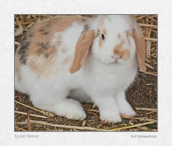 Fluffy Bunny