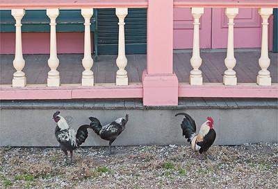 San Juan Bautista Roosters