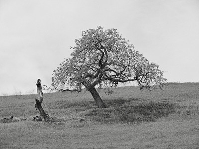 Hw25 Oak