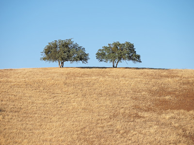 Two Trees (Panasonic 45-200mm lens)