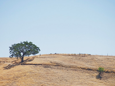 Hollister Hills (JPEG, Olympus 4/3 40-150mm lens)