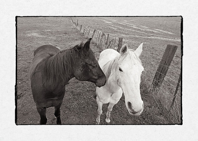 Two Horses_