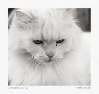 Kitty 2 (IR Photo)