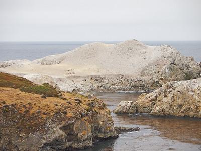 Point Lobos (45-200mm lens)
