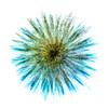 c_WAC_Peter Chalmers_Spiral Palm
