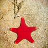 c_WAC_Kim McAvoy_Sea Star