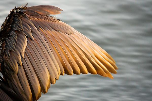Angel Wing - Yannick Morin Rivest