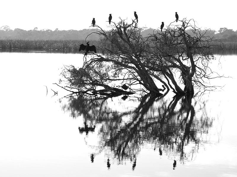 Morning at the Lake - Todd Edwards