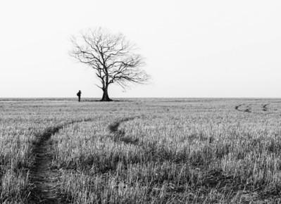 Tree - Marise Fitzmaurice