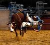 Cow Wins - Michele Augustyn