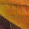 Leaf Map - Ann Jones