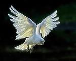 In Flight - Ron Dullard